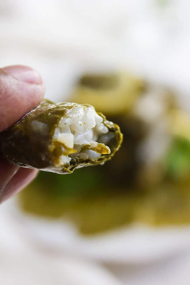 stuffed grape leaves 5